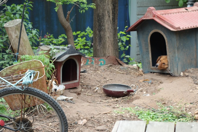If only I could bring home one of these Korean style doghouses!