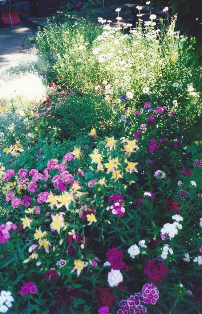 My mother's garden in Arlington