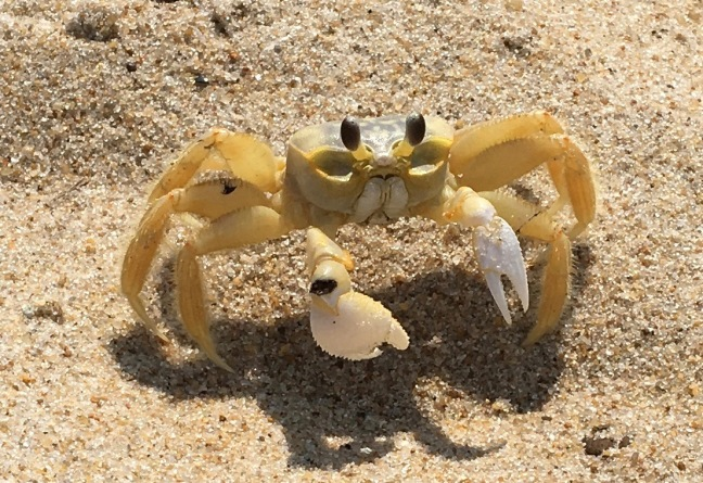 Not feeling crabby at all...